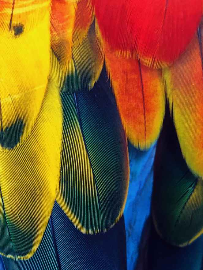close up photo of feathers